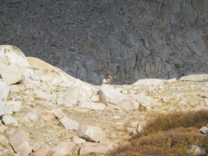 The team spotted big horn sheep on their way up the mountain.